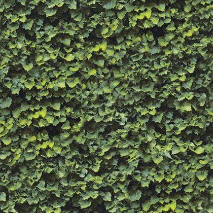 Dlažba Casalgrande Padana Limpha Arborea